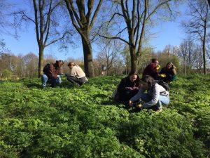 wildplukken amsterdam Noord